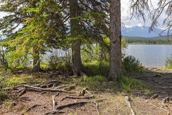 Tree roots on the river bank. Rocky Mountains. Alberta. Canada.