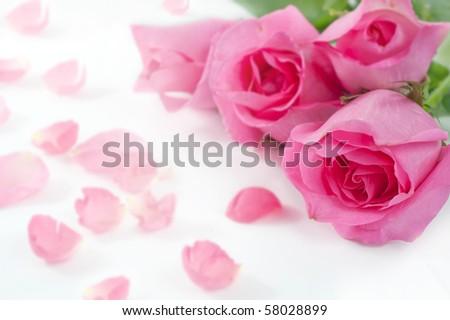 Tree rose on whiterose is a flower symbol represents love romance tree rose on whiterose is a flower symbol represents love romance in valentines mightylinksfo