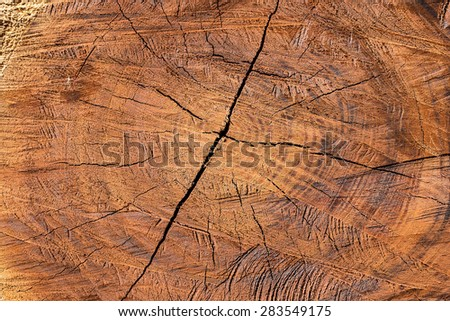 Tree section cut down and life circle shown