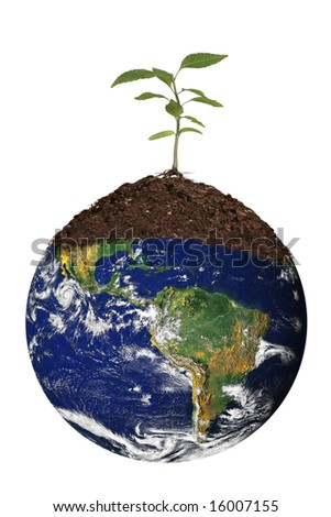 Tree Seedling Atop the Planet Earth. Global Concept