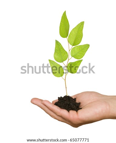 Tree seedling in hand
