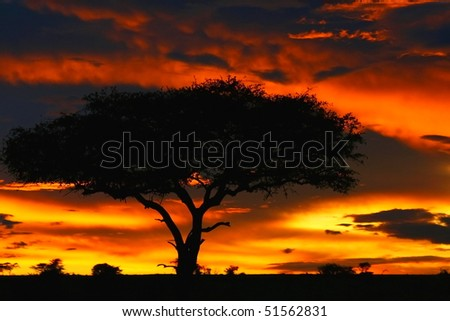 Tree shade and dramatic sunset. Africa. Kenya. Masai Mara.