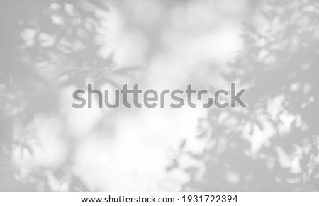 Tree shadow and leaf branch background.  Nature leaves tree branch dark shadow and light from sunlight dappled on white wall texture for background wallpaper and any design