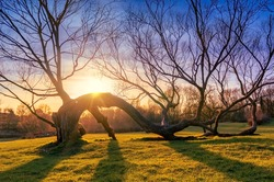 Tree Shadow Sunset, Branches of Old Oak Tree along the Ground, Fairy Summer Sunset, Beautiful Branched Tree Blue Sky Background Summer