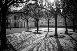 tree shadows in morning Dresden, Germany