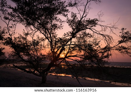 Tree silhouette against bright tropical sunset and sea shore