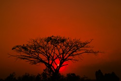 Tree silhouette and beautiful vibrant sunset  background