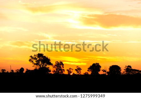 Tree silhouette at Sunrise in Thailand. #1275999349