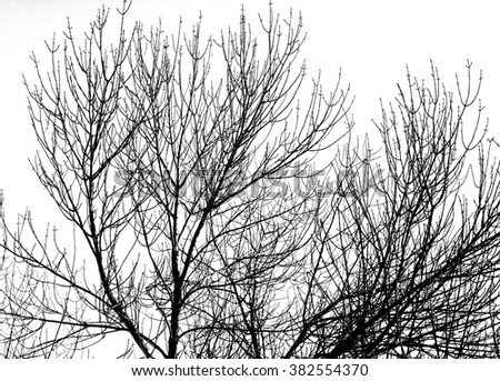 Shutterstock tree silhouette black isolated branch forest icon