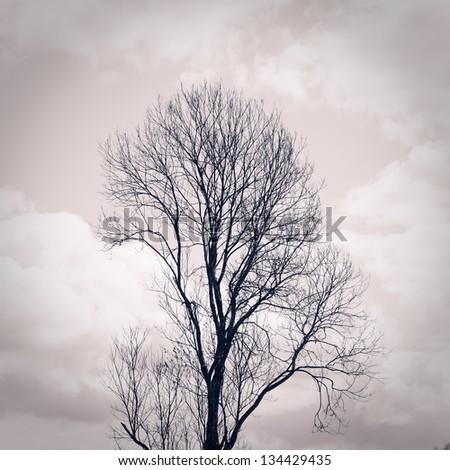 Tree silhouette, closeup toned shot