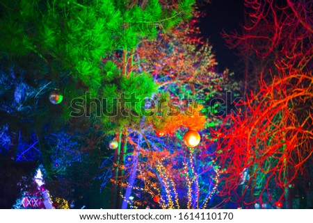 Tree silhouette in park , without leaves, which are illuminated by spotlights in multi colors, at night