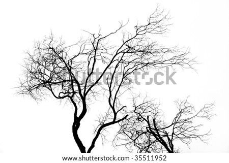 Tree silhouette isolated over white background