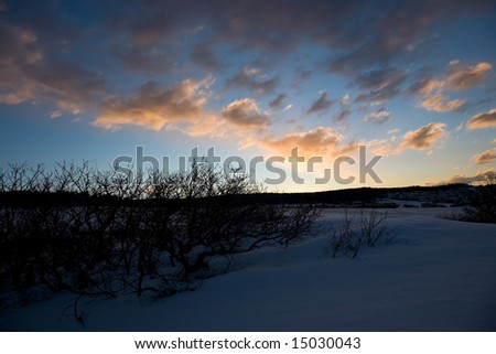 Tree Silhouette on Blue Sky with Snow