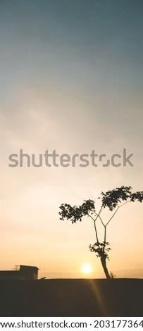 Tree silhouette when sunset doen Stockfoto ©