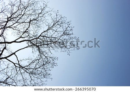 Tree silhouette with blue sky with lens flare. Tree top view. Abstract and nature background.
