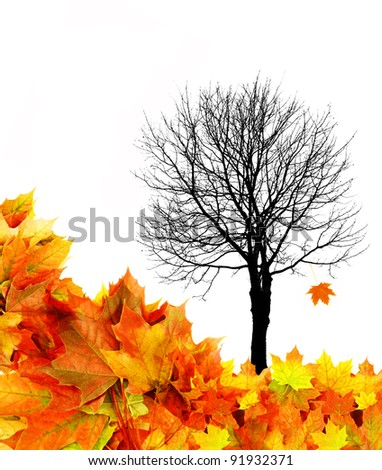 tree silhouette with fall leaves