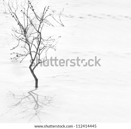 Tree silhouette with shadow on the snow background