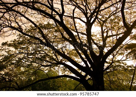 Tree silhouette with sunset sky