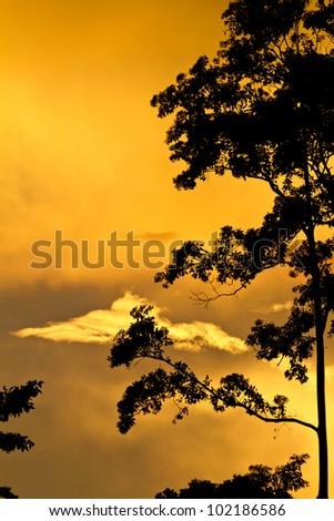 Tree  silhouetted against golden clouds and sunset with copy space