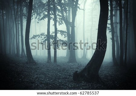 tree silhouettes in a dark forest