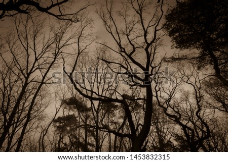 Tree silhouettes in winter, Trees in Winter, Black and White Photo, Sepia Photo