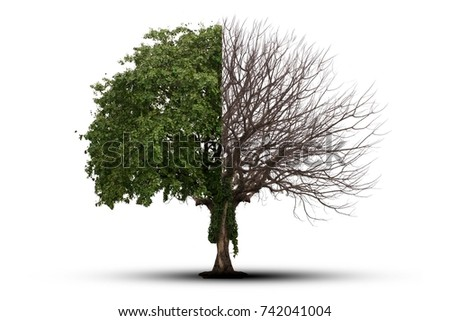 Tree single old and dead tree and young shoot from one root isolated on white background