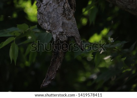 tree skull hanging on tree branch and the background view of green leaves making the pictures beautiful