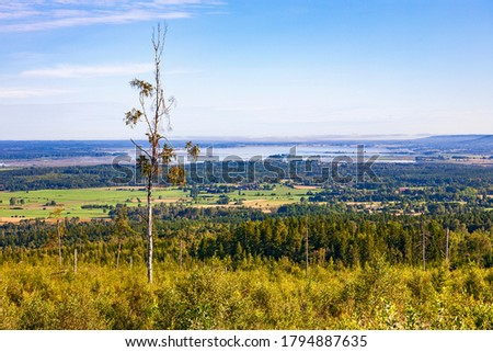 Tree snag in a beautiful landscape view with a lake