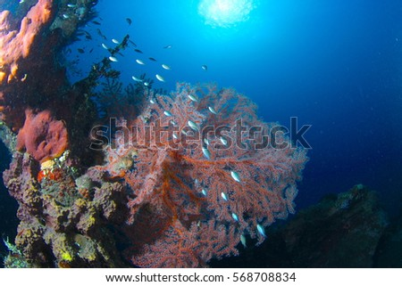 Tree soft corals #568708834