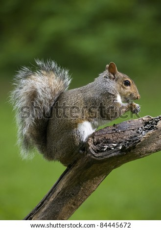 Tree squirrel that looks like it is blessing its seeds
