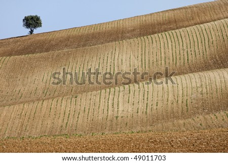 Tree standing alone in a farm field over a blue sky