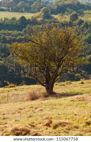 tree standing on a hillside