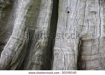 Tree structure or a background.