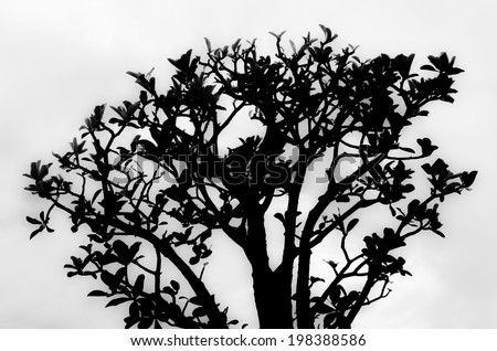 Tree structure shown by isolate black and white shadow