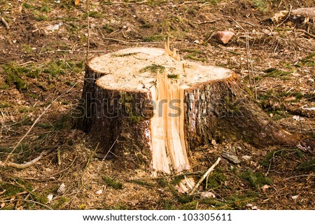 tree stub, deforestation.