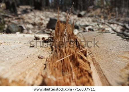 Tree stump  #716807911