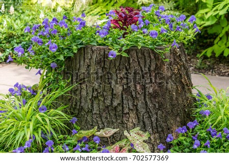 Tree stump being used as a planter for annuals #702577369