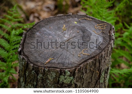 Tree stump close up maple old moss rings foliage ferns background