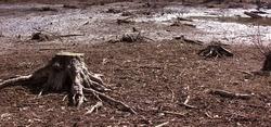 Tree Stump in Swamp