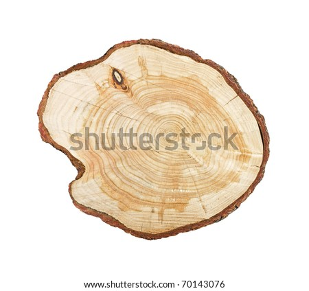 Tree stump isolated on white background