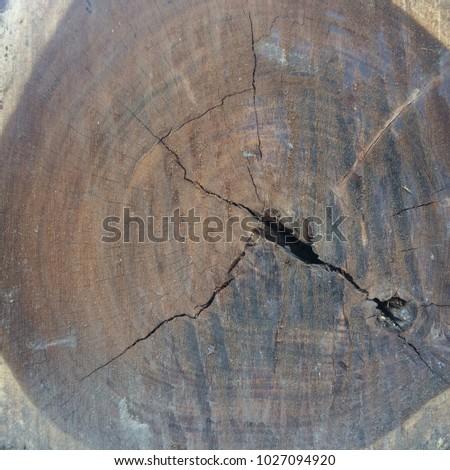 Tree stump texture background #1027094920