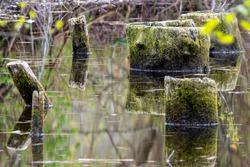 Tree stumps in swamp water, long exposure