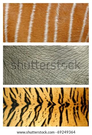 tree style animals skin