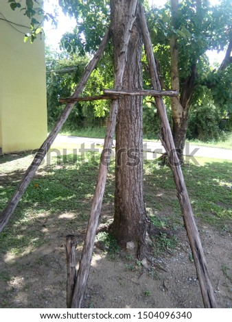 Tree Supports-young trees being supported by wooden stakes