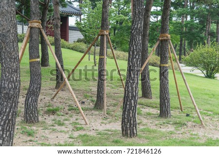 Tree Supports-young trees being supported by wooden stakes #721846126