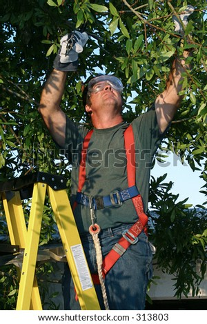 Tree surgeon on ladder trimming tree.