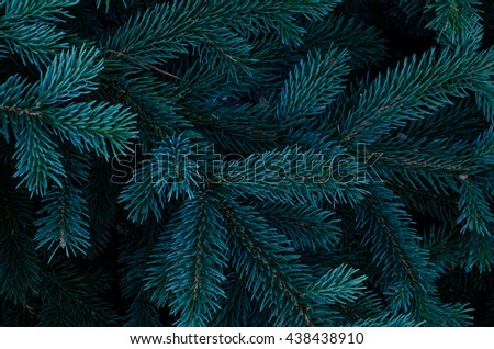 stock photo tree texture 438438910 - Каталог — Фотообои «Текстуры»