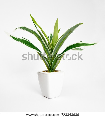 Tree that decorate the room. Pot fake plant isolated on white
