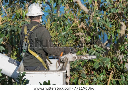 tree timmer in bucket holding chainsaw
