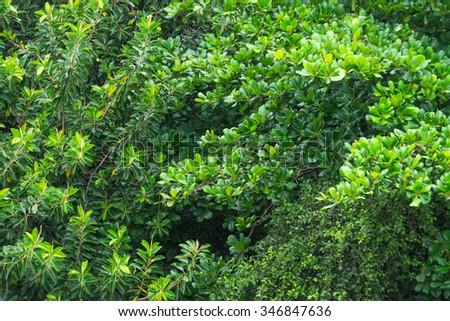 Tree top - Leblon, Rio de Janeiro, Brazil Topo das árvores - Leblon, Rio de Janeiro, Brasil Foto stock ©